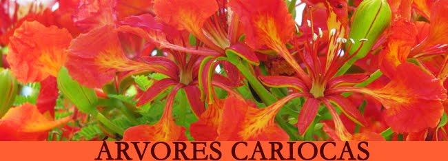 banner-arvores-cariocas
