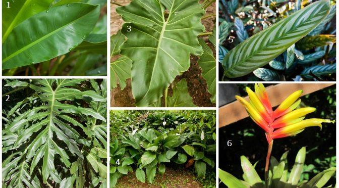 As plantas e o ar que respiramos